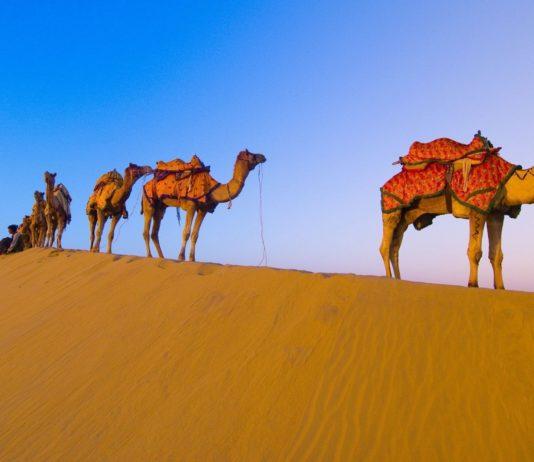 Camel trains