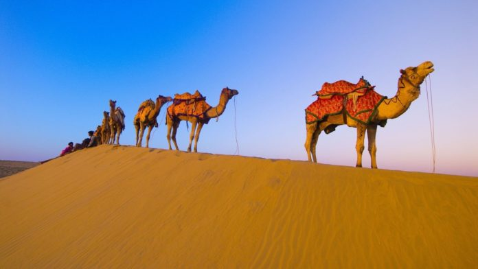 Camel trains